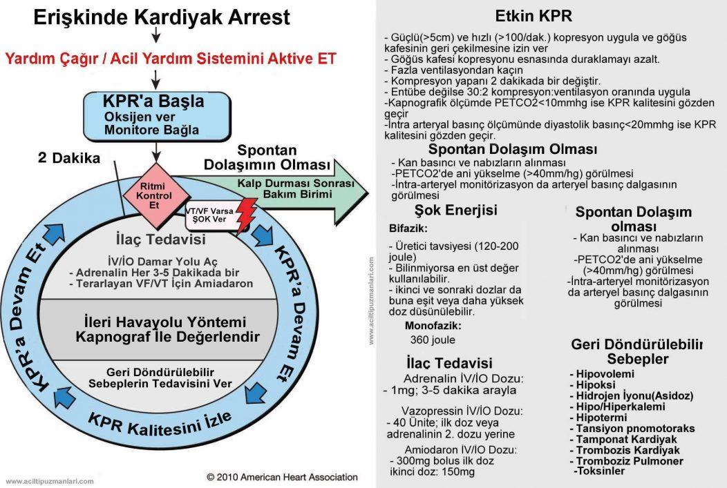 ACLS 2010 Kardiyak Arrest dairesel Algoritma